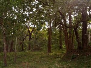 Periyar forest