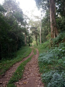 The dirt-road accessible only to ranger vehicles